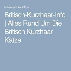 Britisch-Kurzhaar-Info | Alles Rund Um Die Britisch Kurzhaar Katze