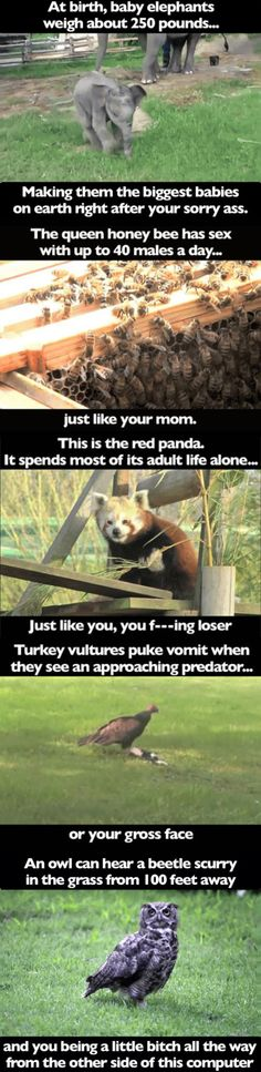 Animal Facts You Didn't Know Until Now