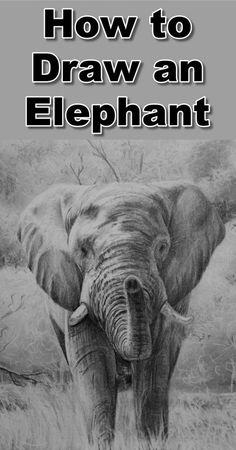How to Draw an Elephant — Online Art Lessons Drawing Techniques, Drawing Tips, Pencil Drawing Tutorials, Easy Elephant Drawing, Elephant Drawings, Elephant Artwork, Animal Drawings, Art Drawings, Elephant Eye