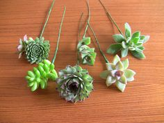 DIY Succulent bouquet wire up succulents with floral tape + wire attached to succulents