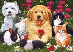Kedi ve köpek. Rus Hizmeti Online Diaries - Kayd üzerine tartışma