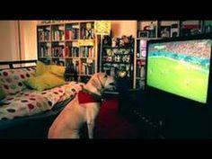 Veja a loucura deste cão quando Varela marcou o golo do empate no EUA-PORTUGAL! | Crazy Sport News