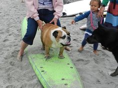 LESSONS IN DOG SURFING