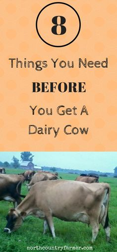 Some things you need before you buy a homestead dairy cow