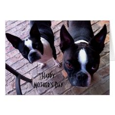 #Boston Terrier Mother's Day Card - #boston #terrier #puppy #dog #dogs #pet #pets #cute #bostonterrier