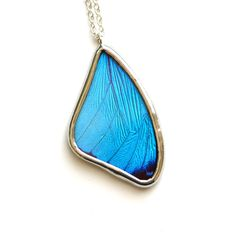 Real Butterfly Wing Necklace. Blue Morpho Necklace. Blue Butterfly Necklace. Insect Jewelry. Butterfly Necklace. Morpho Menelaus Necklace by HouseThatCrowBuilt on Etsy https://www.etsy.com/listing/62519126/real-butterfly-wing-necklace-blue-morpho