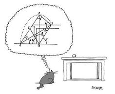 Mind cat  | matematicascercanas