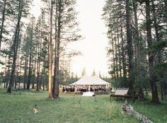 Celebrate in wild glory on 80 acres of land completely surrounded by national forest.