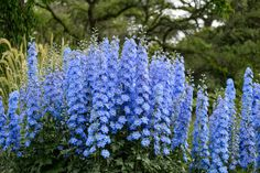 Monty Don shows you how easy it is to take basal cuttings from perennials like delphiniums, lamiums and lupins, in this quick video guide on gardenersworld.com.