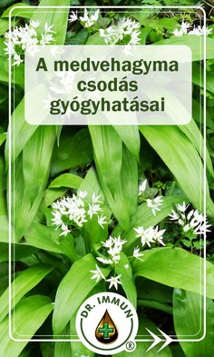 Allium, Herbalism, Spices, Health Fitness, Herbs, Vegetables, Health And Beauty, Herbal Medicine, Spice