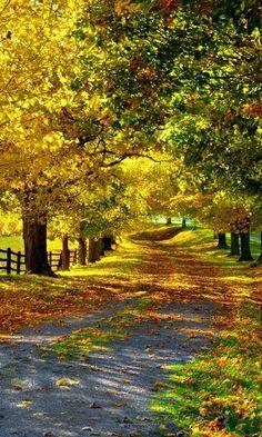 Природа, забор, деревья, аллея, осень, листья, дорога