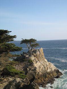 Carmel, California  What a wonderful world it is.