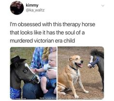 "Pic of a little horse under the caption, ""I'm obsessed with this therapy horse that looks like it has the soul of a murdered Victorian era child"" funny captions funny humor funny memes animal funny Memes Humor, Funny Memes, Jokes, Haha Meme, Funny Captions, Funny Tweets, Cat Memes, Funny Videos, Stupid Funny"