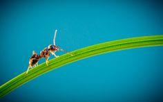 Auch Ameisen nutzen eine Toilette...