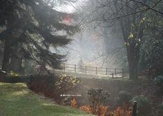 Stobo in the mist - Stobo Gardens in the Scottish Borders