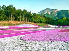 Hitsujiyama Park, Chichibu    25 Most Beautiful Places in Japan - Photos - Condé Nast Traveler