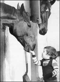 Red Rum takes candy from a baby.  Donald McCain and Red Rum