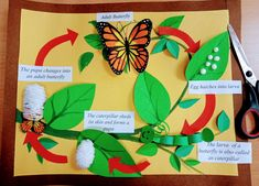 Butterfly Life cycle – Famous Last Words School Science Projects, Science Experiments Kids, Science For Kids, Science Activities, Art For Kids, Butterfly Project, Butterfly Crafts, Life Cycle Craft, Butterfly Life Cycle