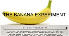 This Is The Banana Experiment And It'll Leave You With An Important Life Lesson