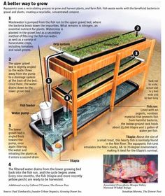 Aquaponics: detailed step-by-step guide how to build an #aquaponics system using simple components and start growing you own 100% organic food. #gardening #organic
