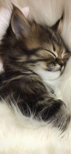 Il semble heureux. Ce chaton ?