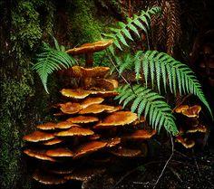 Fungi fountain