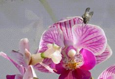 Kindergarten and Mooneyisms: 5 Minute Science Lesson - Orchid Mantis