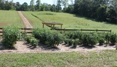 6 Tips To Eliminate Weeds From Your Survival Garden - http://SurvivalistDaily.com/6-tips-to-eliminate-weeds-from-your-survival-garden/