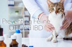 Feline UTM IBD Cat Recipes, Raw Food Recipes, Raw Food Diet, Cat Treats, Cat Food, Management, Pets, Animals, Cat Feeding