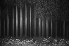 Afforestation by Tsuneya Fujii