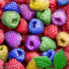 Raspberries - all-the-colors Rainbow Food, Love Rainbow, Taste The Rainbow, Over The Rainbow, Rainbow Colors, World Of Color, Color Of Life, Color Splash, All The Colors