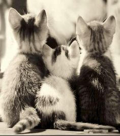 it's the back of the kittens but it dosen't matter there still really CUTE