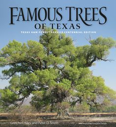 Texas Matters: Famous Tress of Texas  (History of 6 Famous Trees)