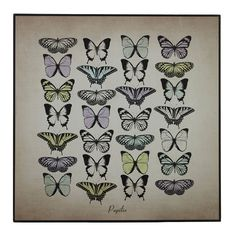 Papilio Butterfly, Wall Plaque, MDF