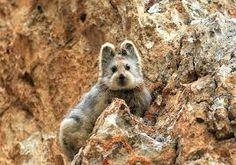 「野生 ウサギ 生息地」の画像検索結果
