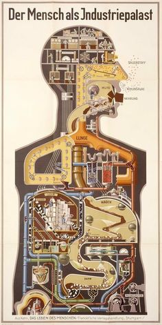 Der Mensch als Industriepalast (Man as Industrial Palace) Chromolithograph. National Library of Medicine. Fritz Kahn Kahn's modernist visualization of the digestive and respiratory system as industrial palace, really a chemical plant. Art Et Design, Book Design, Graphic Design, Medical Posters, Medical Art, Medical Science, Chemical Plant, Lunge, Information Graphics