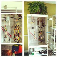 "Took an ikea aneboda wardrobe and turned it into a parrot cage! Rubbermade wire shelving as the cage front secured with cable ties as hinges and mirror hooks as locks. Added self stick tiles to the back and bottom, drilled stainless steel eye hooks to hang toys and perches. Going to make several more, add moulding  and create a giant ""built in"" cage system. So happy with the results. Total cost $150!"