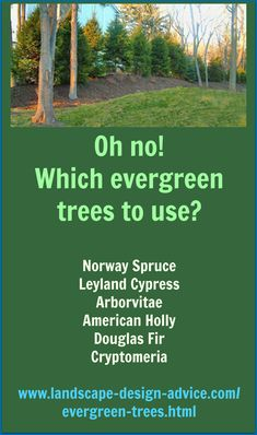 Top 9 Evergreen Trees - Help with choosing the right ones for your landscape. http://www.landscape-design-advice.com/evergreen-trees.html