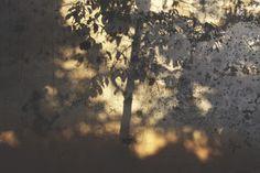 Monde en poésie: Abbas Kiarostami, Des milliers d'arbres solitaires...