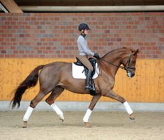 A rising star in Germany's dressage community explains the training quality of submission and tells how you can develop it in your horse. By Helen Langehanenberg with Beth Baumert for Dressage Today Horse Riding Tips, Riding Gear, Riding Clothes, Trail Riding, Horse Tips, Horse Exercises, Dressage Horses, Draft Horses, English Riding