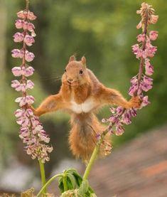 squirrel and flower - Pixdaus