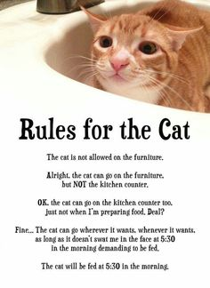 So true, how we negotiate with ourselves for the cat!