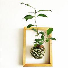 Connaissez-vous le Kokedama ? La tendance végétale à suivre ! - Des idées