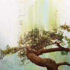 """""""Gulf Islands Tree #1"""" 36x36 inches by Steven Nederveen"""