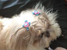 Shih tzu hairstyle