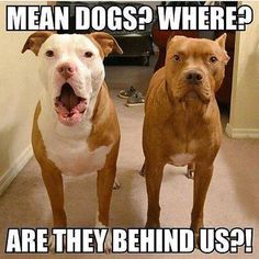 OMG, don't look round, don't move, don't  like this, RUUNNNNN. Typical #Pitbulls :-D