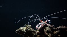 Ocean Whip by Bambang Nugroho on 500px