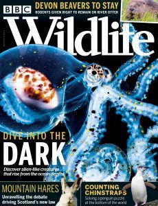 download BBC Wildlife magazine September 2020 issue Dark Mountains, Award Winning Photography, River Otter, Latest Discoveries, Ocean Creatures, Environmental Issues, Otters, Natural World, Mammals