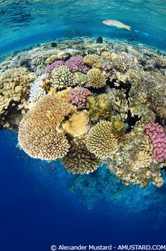 Egypt, Red Sea