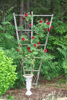 Seven Oaks, Home and Garden Joy: How to Build a Trellis for Climbing Roses
